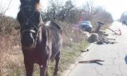 Нелепа смърт застигна каруцар във Варвара