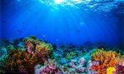 Откриха нов коралов риф (ВИДЕО)