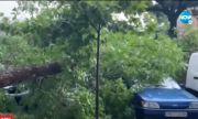 Какви са щетите след бурята в Пловдив