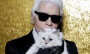 Най-богатата котка в света има 250 000 последователи в Instagram (СНИМКИ)