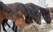 3 г. по-късно: Глобиха собственика на изоставените в Осоговската планина коне с 4500 лв.