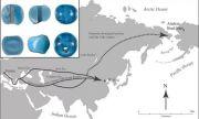 Сини мъниста с европейски произход отпреди Колумб са открити в Аляска