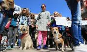 Искат среща с премиера заради насилието над животни