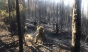 Пожар лумна в Кюстендилско