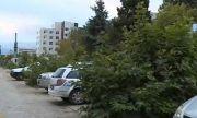 Масова сеч на млади дървета в голям град