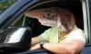 Най-опасните шофьори според зодията