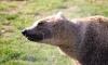 Мечката е сред най-застрашените видове у нас