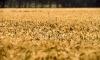 Ръст в търговията с аграрни стоки от 8,8%
