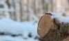 Прокуратурата разследва незаконна сеч на 900 дървета в Етрополе