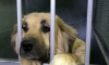 98 кучета са осиновени през ноември