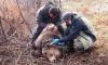 Сложиха GPS на мечока Митко