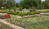 Ботаническата градина в Балчик – на 61 години
