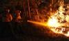 Поне 19 огнеборци загинаха при горски пожар в САЩ