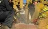 Пожарникари спасиха крадла, заседнала в комин