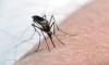 Исландия: Истински европейски рай без комари