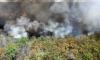 Пламъци в Австралия! Борба с над 80 горски пожара