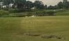 Питон вся паника на голф турнир в Малайзия
