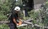 Двама пострадаха от паднали клони в Шумен