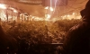Разбиха оранжерия с марихуана - 3
