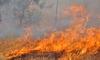 Пожарът в Сакар планина е засегнал 5 000 дка гора